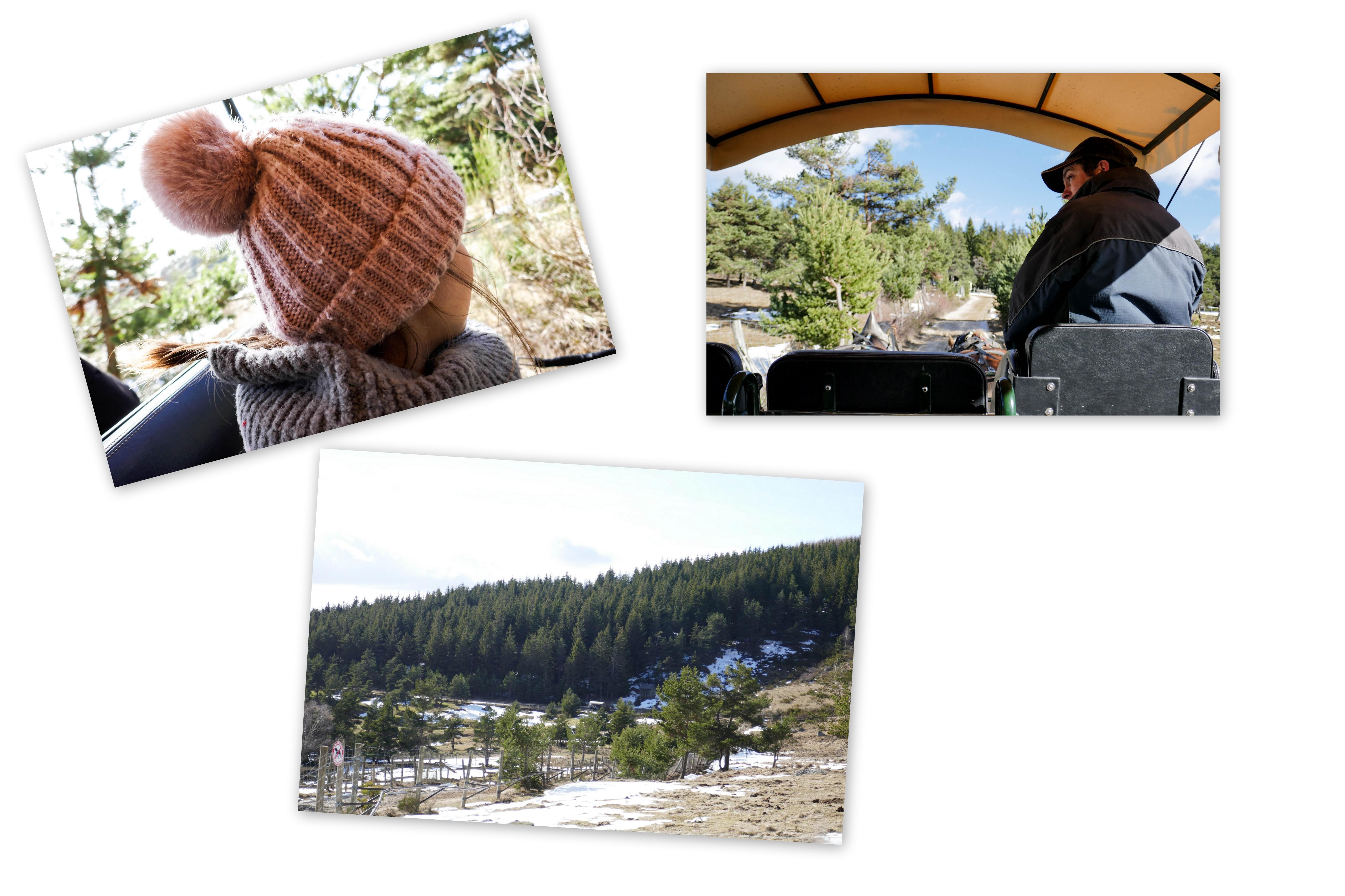 Réserve des Bisons d'europe Margeride - Lozère - Margeride