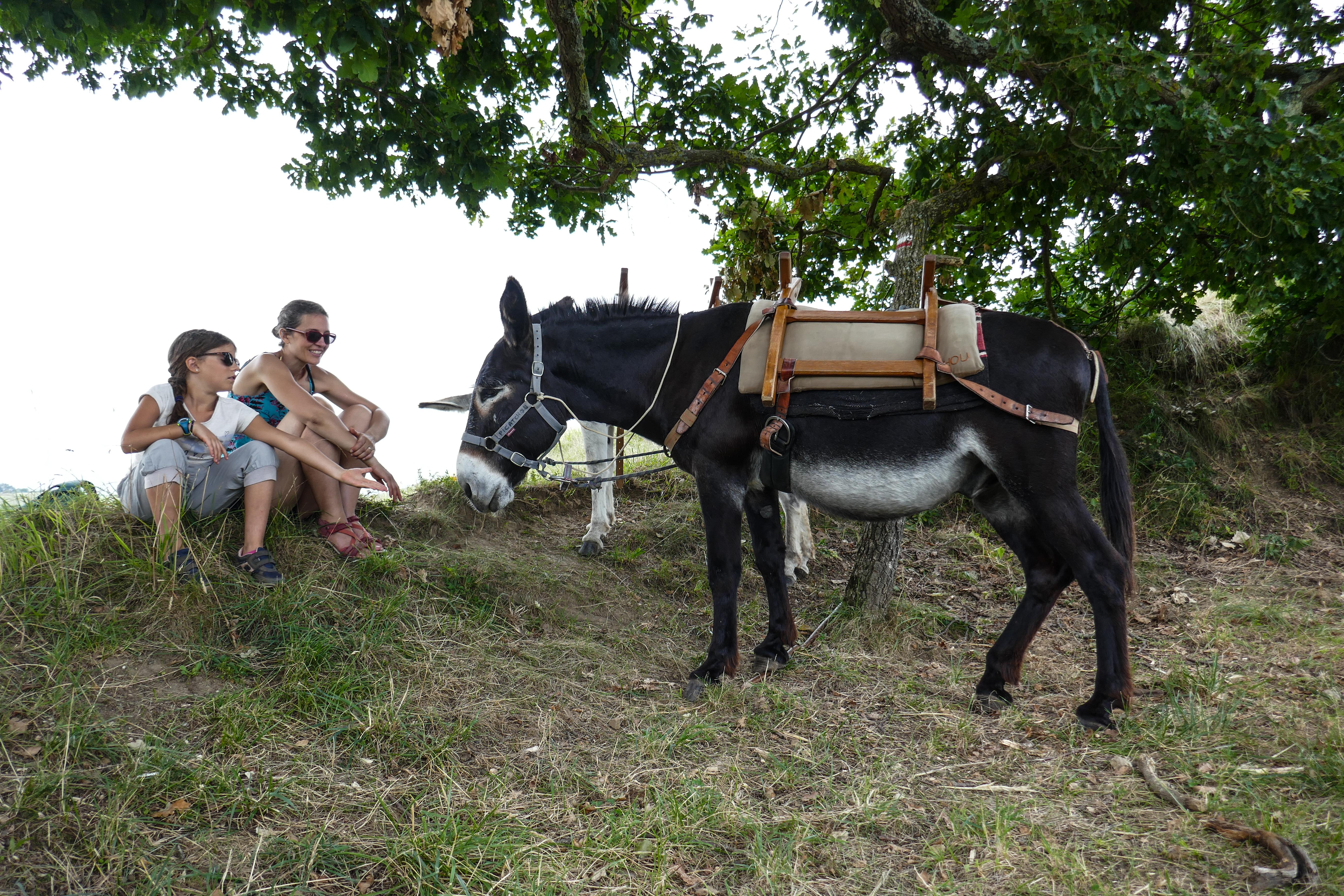 Le Rucher des ânes - blog famille - Haute-Garonne Tourisme - Rieux Volvestre