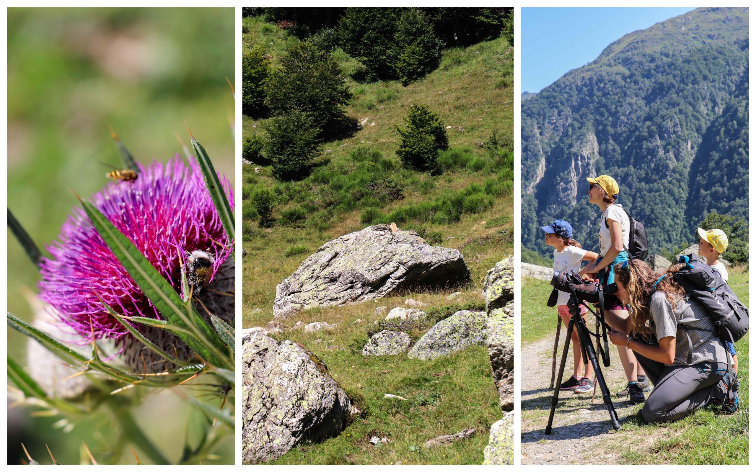 Marmottes Orlu - Blog - Ariège