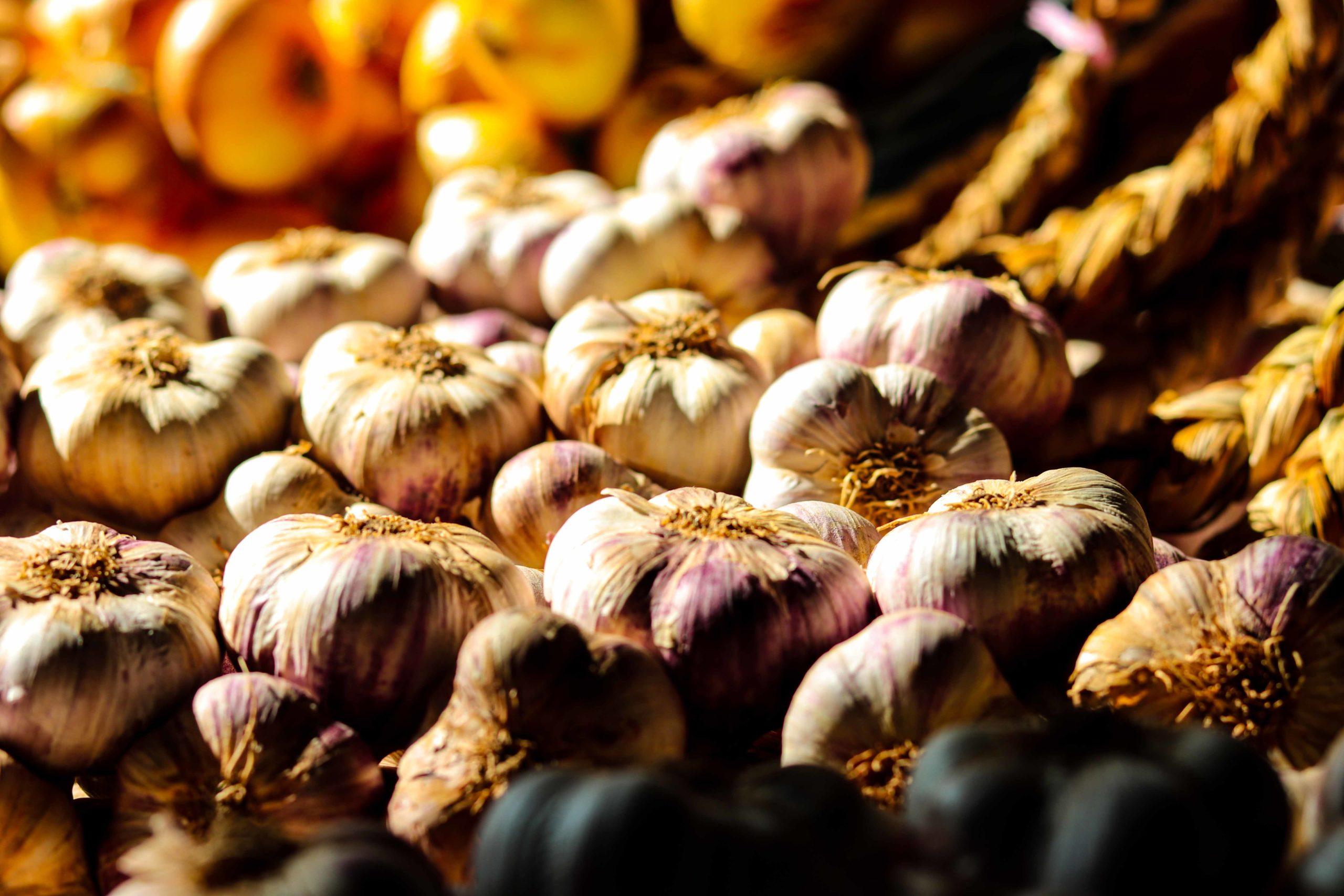 Ail violet de Cadours AOP - Que faire en famille dans le Pays Tolosan - Haute Garonne en famille