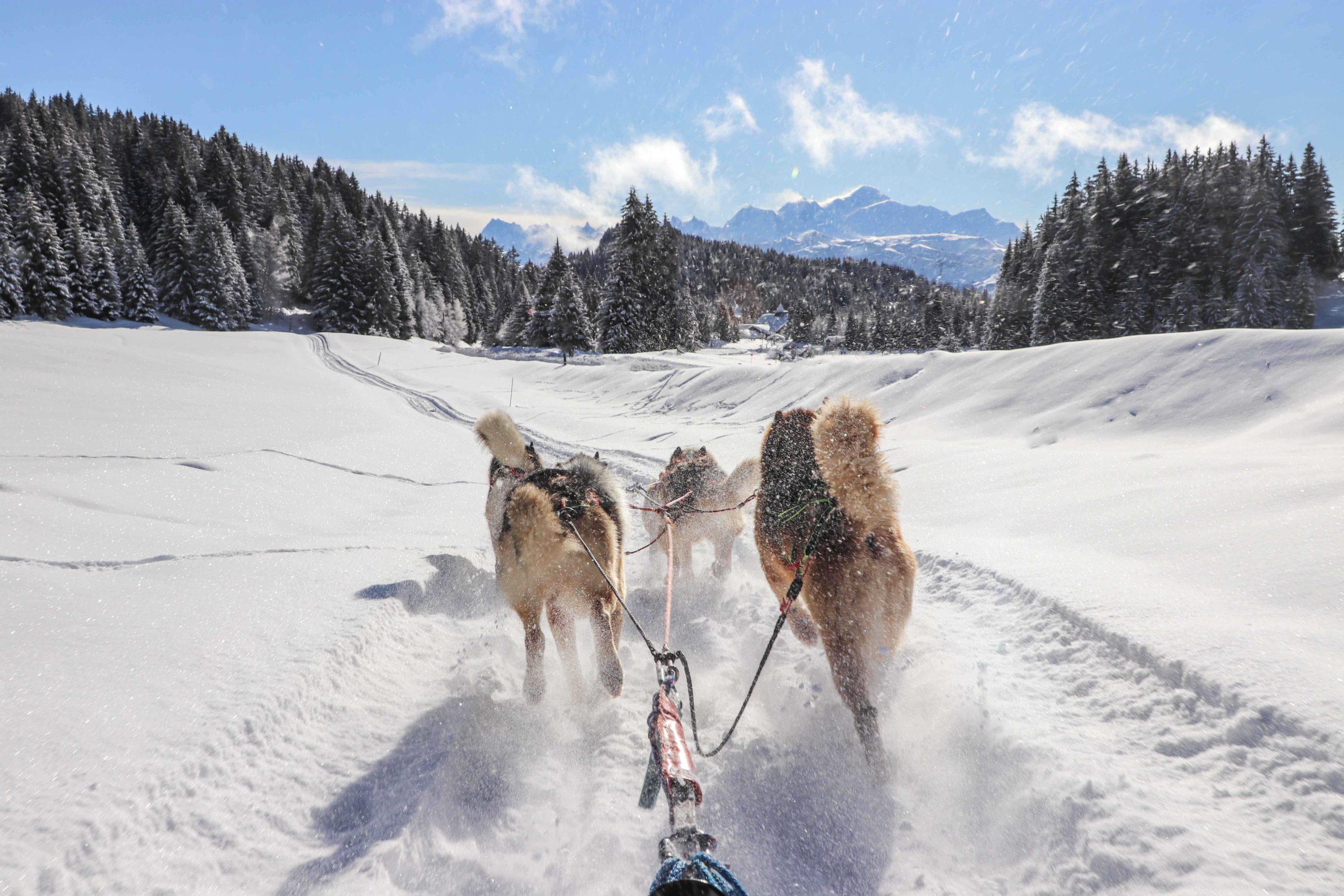 S'évader le temps d'une balade en chien de traineau sur les plateaux du Praz de Lys