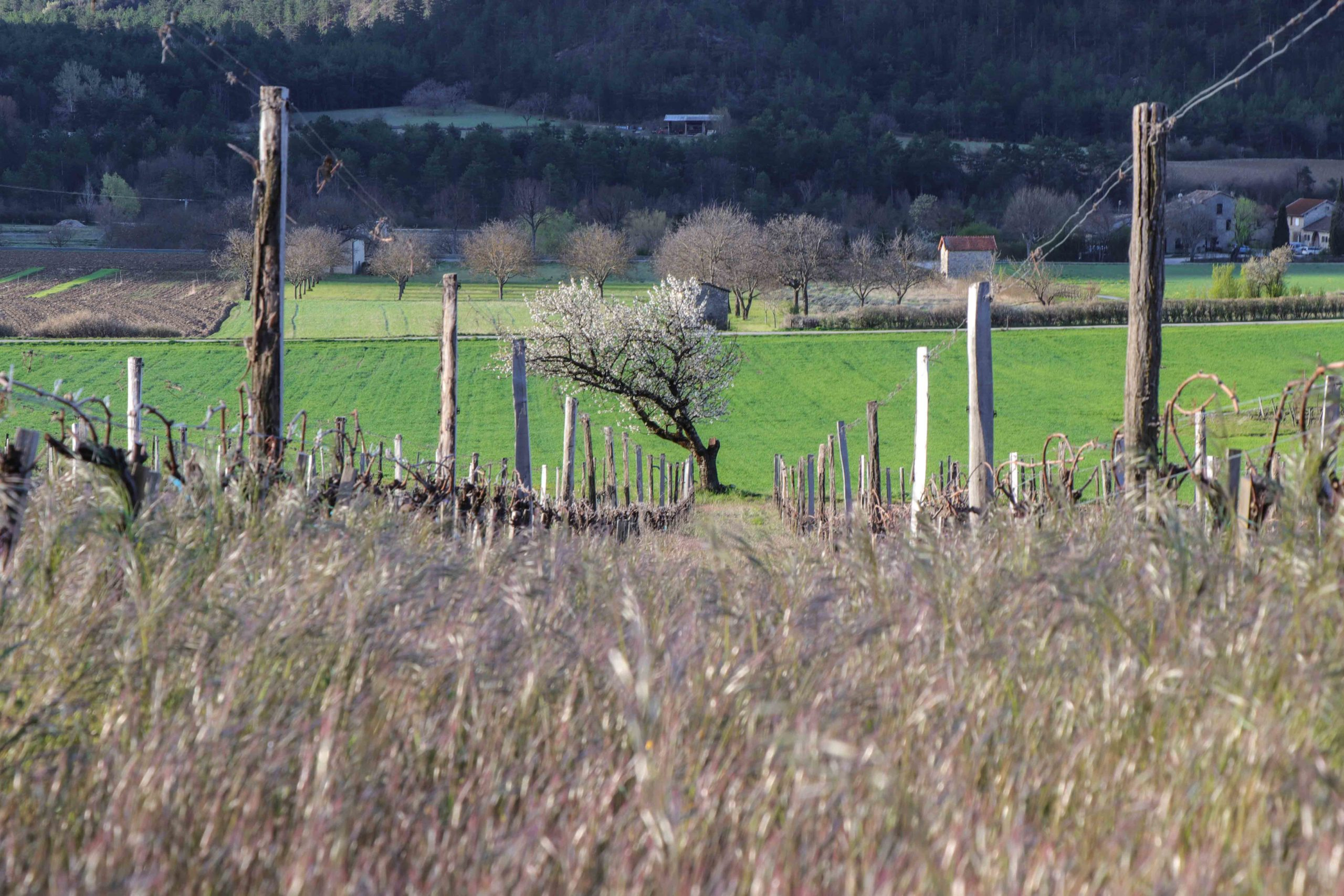 Châtillon-en-Diois ses vignobles et ses cabanons