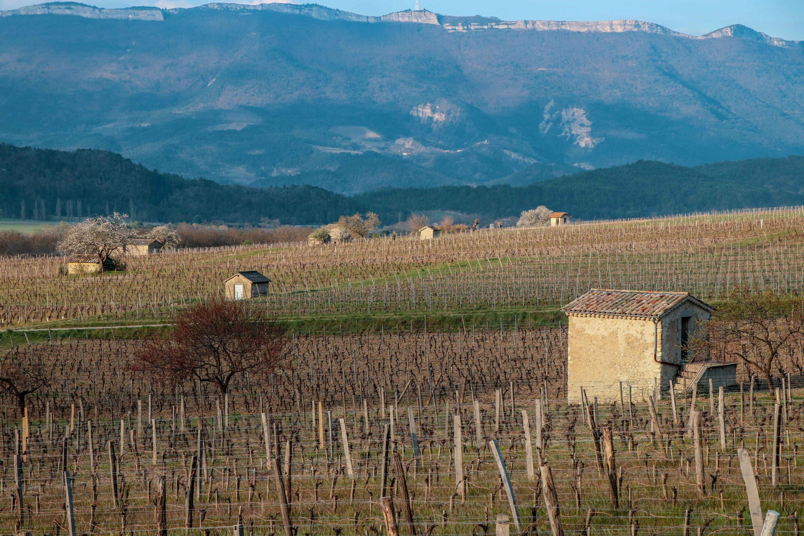 les cabanons de vigne de Châtillon-en-Diois